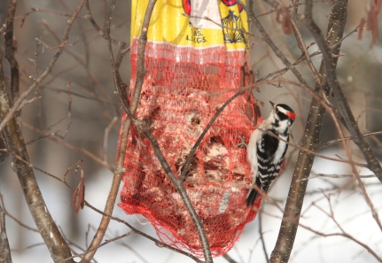 produce bag filled with suet and seed
